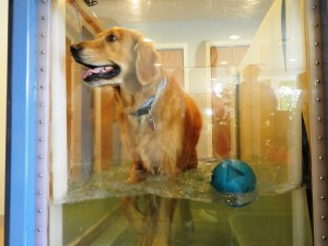 physical rehabilitation for senior dogs