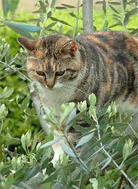 vaccines for outdoor cats