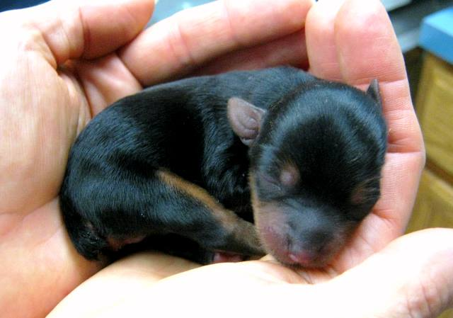 caring for orphaned puppies